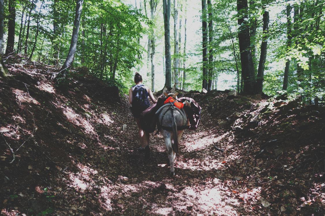 randonnée dans les vosges du sud avec un âne
