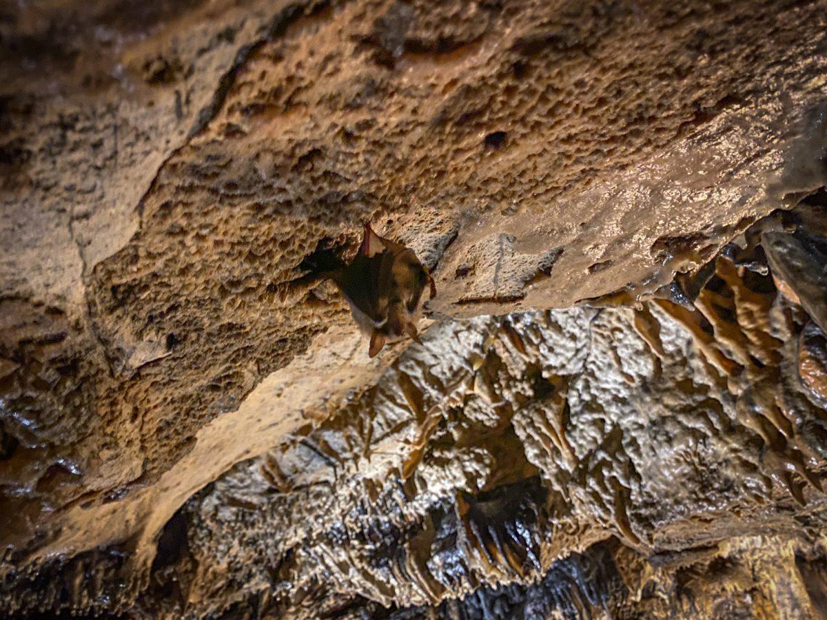 chauve-souris grotte de cravanche