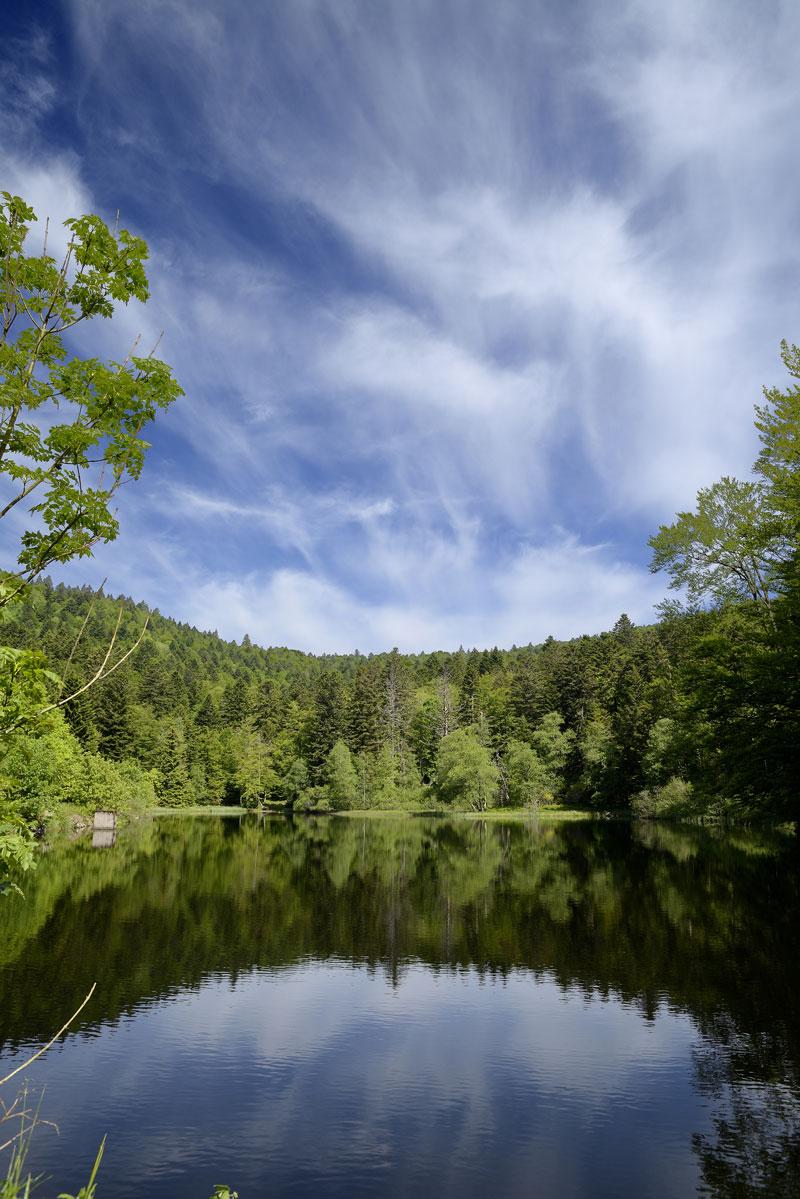 Balade à l'étang du petit haut